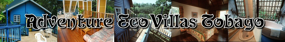 Adventure Ecovillas Tobago - birdwatchers paradise